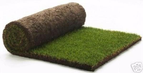 Beautifull green neat rolled instant evergreen carpet for Garden design zimbabwe